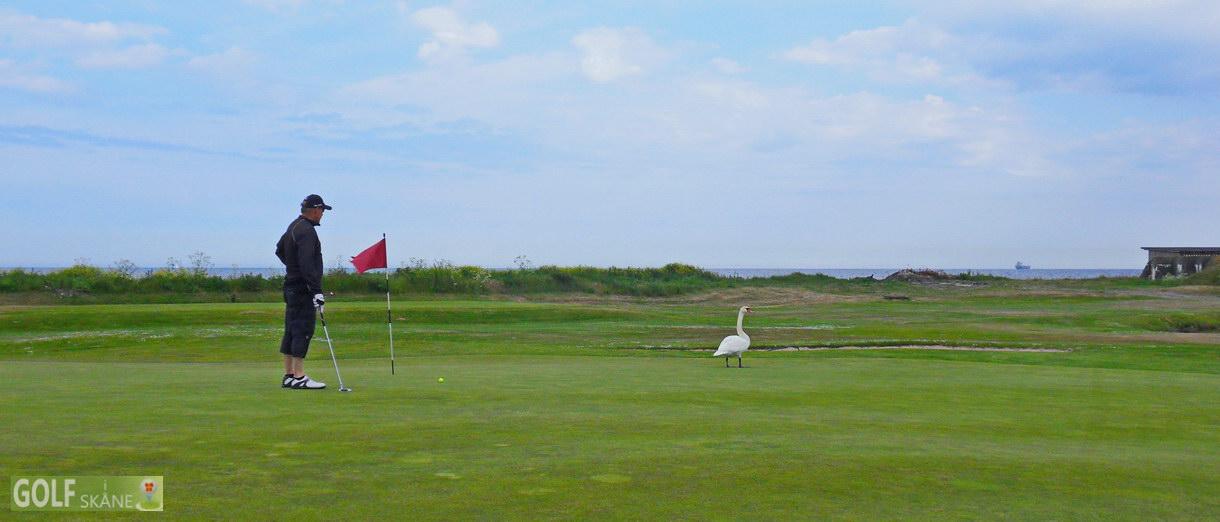 Golf i Skåne banbild- Trelleborgs Golfklubb Adr. golfiskane.se